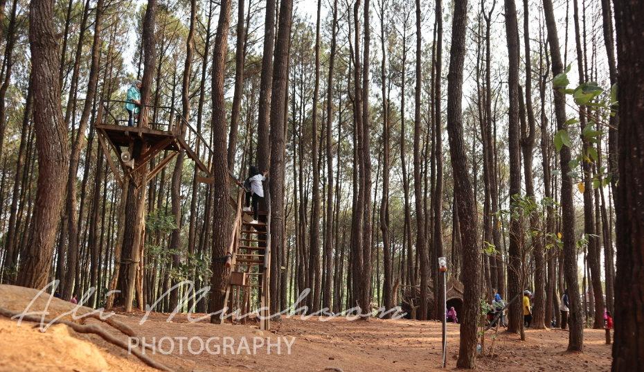 Pinus Pengger Bantul