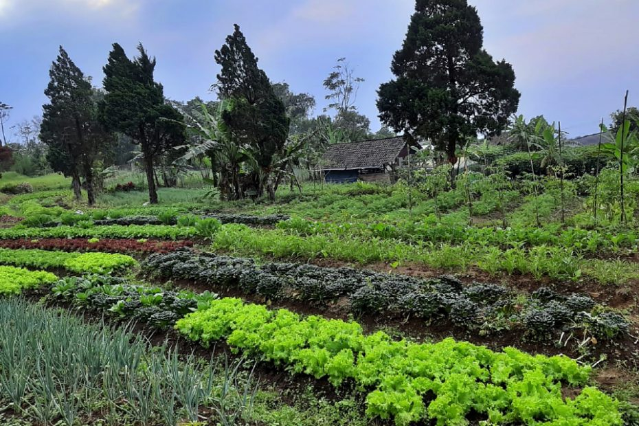 "Twelve's Organic ""Sarasehan Petani & Konsumen Organik : Choose organic, now your farmers and now your food."""