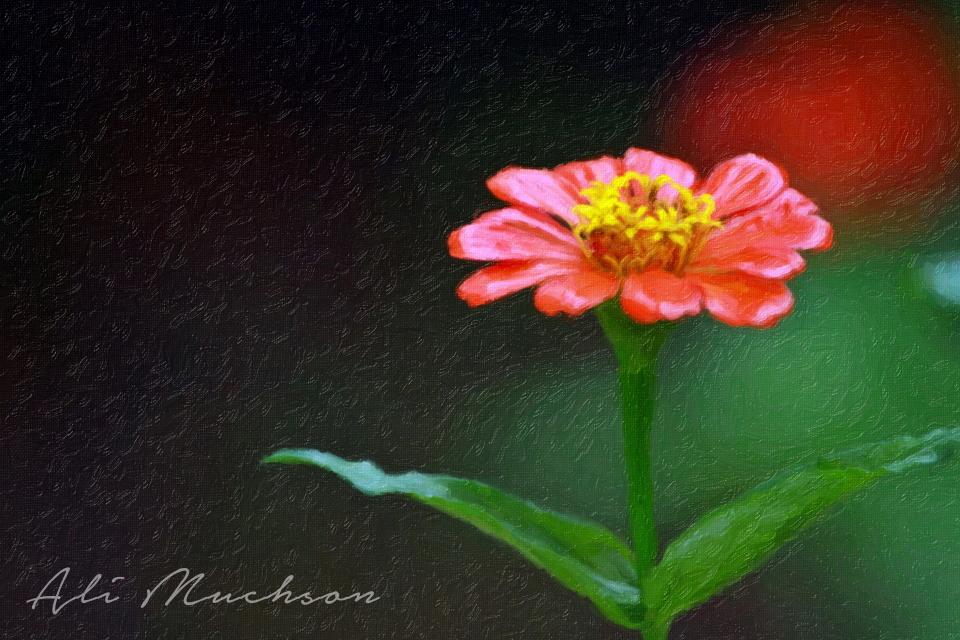 Dekorasi - Hiasan Dinding - Lukisan Foto - Photo Painting