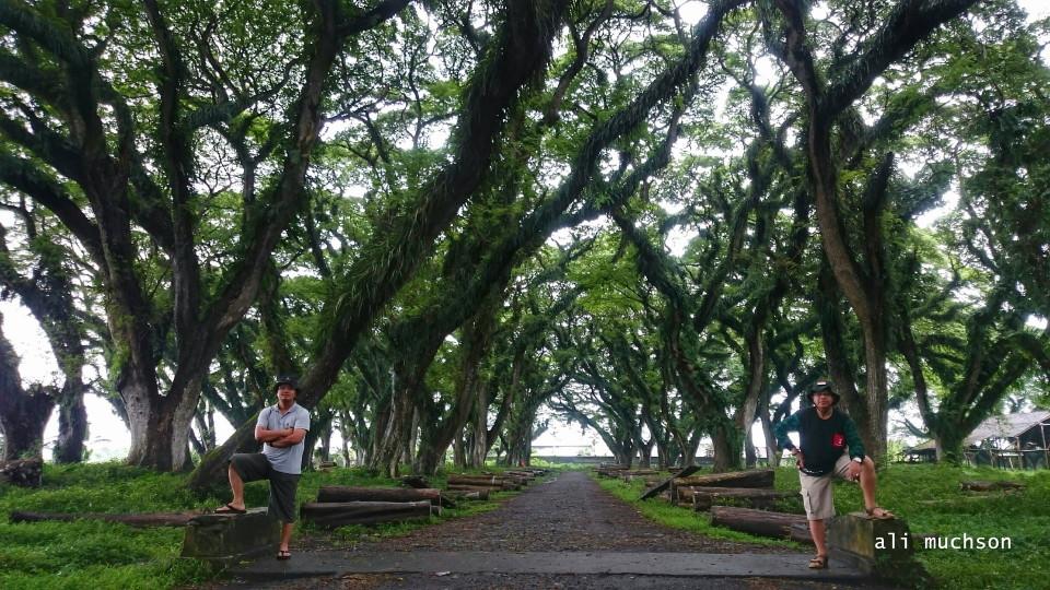 Hari Pohon Sedunia atau World Tree Day 2020