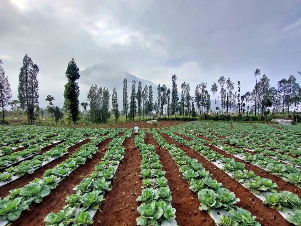 "Hari Lingkungan Hidup Sedunia 2021 : ""Turulah Turun Tangan Restorasi Ekosistem!"""